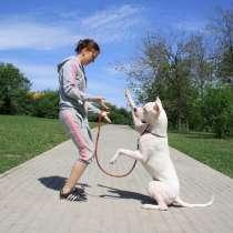 Выгул собак в ЮАО, в Москве