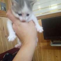 Кошка, в Железногорске