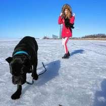 Передержка собак, Догситер, Выгул, в Санкт-Петербурге