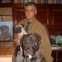 Дрессировка собак в Пятигорске, в Пятигорске