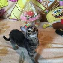 Котёнок, в Москве