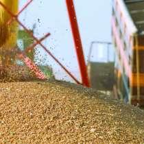 Пшеница 3, 4, 5 класс экспорт в Индия, в Москве