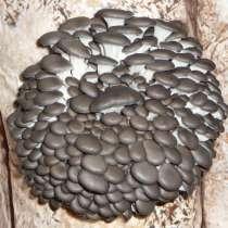 Грибной мицелий вешенки (М-5), в Туле