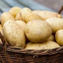 Продам картофель. Только от 10кг, в Красноярске