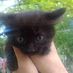 Котёнок - лапочка, в Тольятти