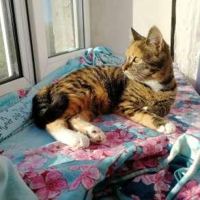 Кошечка ищет дом, в Хабаровске