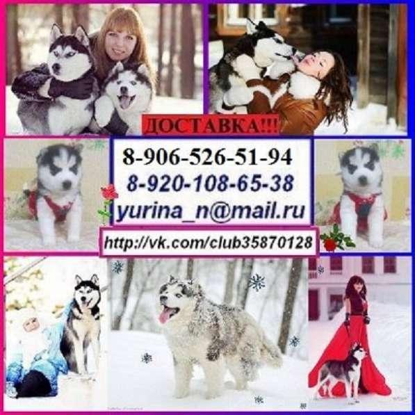 Славные малыши сибирской хаски
