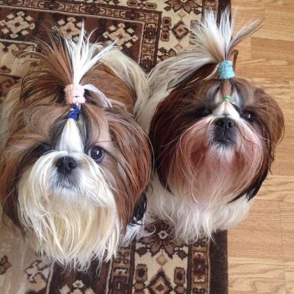 Инструктор по вязке собак с большим опытом