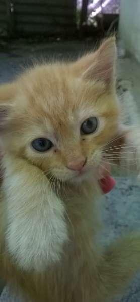 Рыжий котенок,2месяца