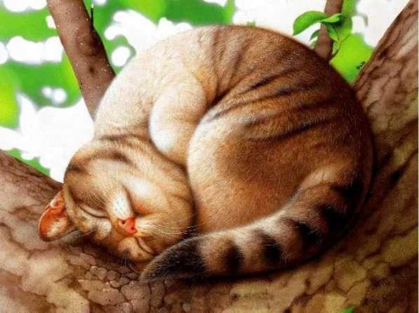 Кастрация котов, кобелей недорого (у вас на дому) обнинск