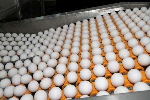 Яйцо куриное С1. Оптом
