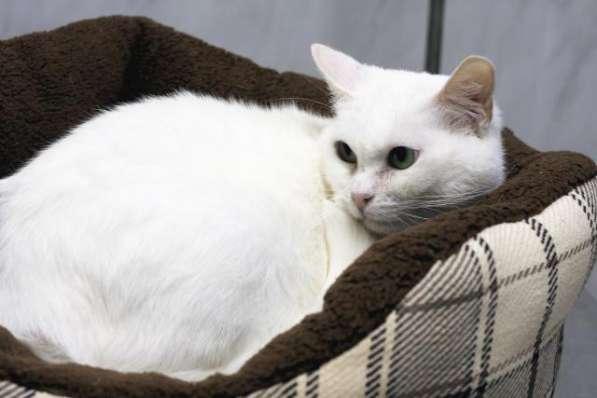 Прекрасная кошка по имени Сага в добрые руки! в Москве фото 3