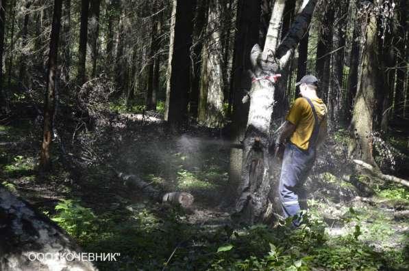Удаление деревьев в Воронеже и Воронежской области