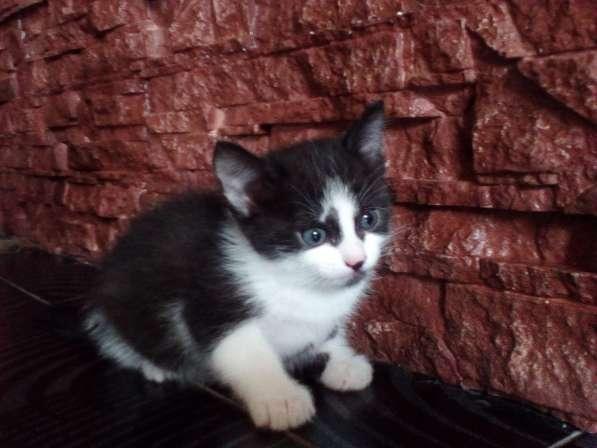 Отдам котят в фото 3
