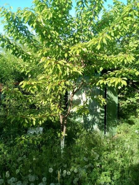 Продаю или меняю дачу в Краснодаре на дом во Владимире в Краснодаре фото 8