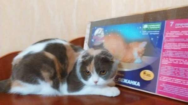 Когтедралки для кошек в Волгограде