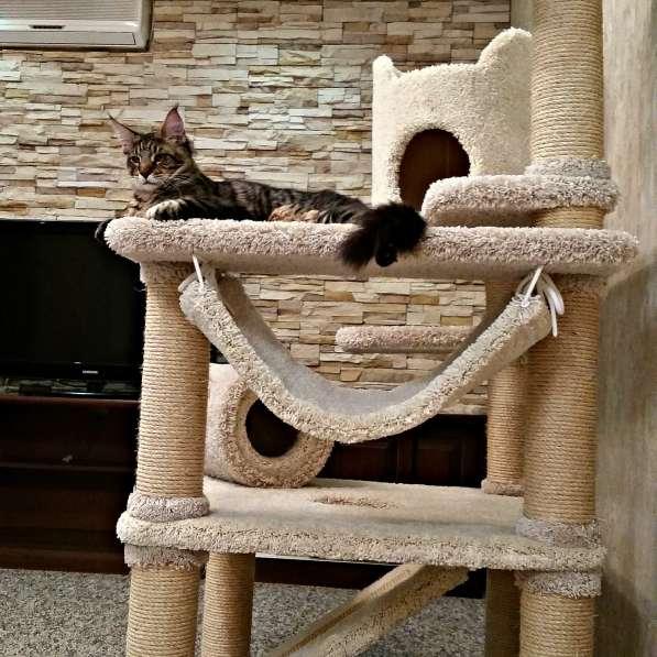 Изготовление комплексов и домиков для кошек на заказ в Ростове-на-Дону фото 14