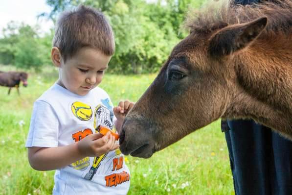 Верховая езда ребенка на пони. Полесск в Калининграде фото 4
