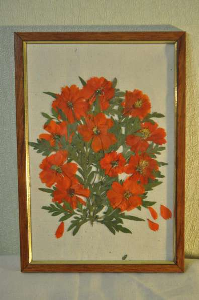 Картины из сухоцвета смешные коты и совы домовьенки другое