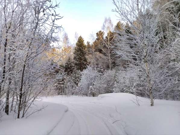 Участок с лесом в Красноярске фото 5