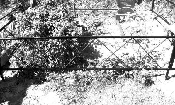 Ограды на кладбище в фото 4