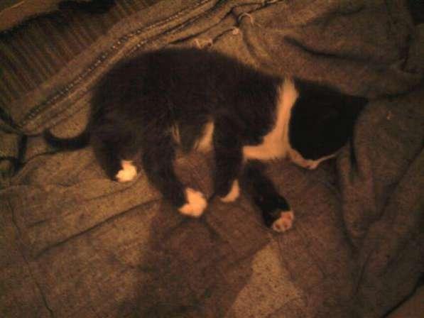 Черный котенок 1.5 мес.