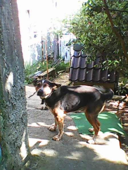 Сторожевая собака в хорошие руки в Сочи