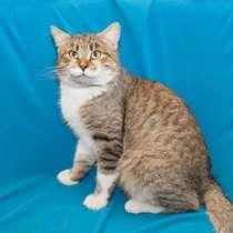Отдам даром Красавец Деймон, молодой котик-крысолов, в г.Москва