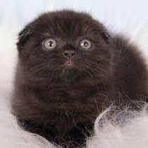 Черные вислоухие котик и кошечка, в г.Санкт-Петербург