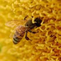 Ищу партнера в растущий бизнес с продуктами пчеловодства, в г.Мадрид