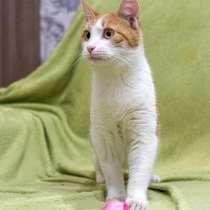 Солнечный Ральф, домашний котик-подросток ищет дом, в г.Москва