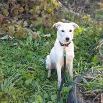 Собачки, в г.Краснодар