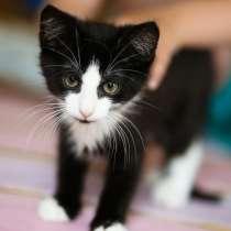 Озорной котёнок Том ищет дом, в г.Санкт-Петербург
