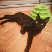 Черная богиня кошечка Шадо ищет дом, в Санкт-Петербурге