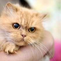 Кошка живущая в темноте, Перис ищет доброе сердце, в г.Москва