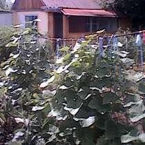 Продам дачу в Дачном микрорайоне города Павлодара, в г.Павлодар