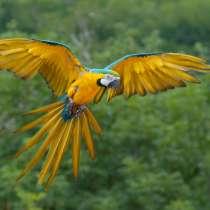 Продам попугаяАра, в Димитровграде