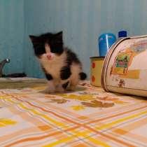 Котёнок найден на улице, в г.Ижевск