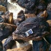 Чага березовый гриб, в Владивостоке