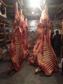 Мясо говядины п/т на кости оптом, в Новосибирске