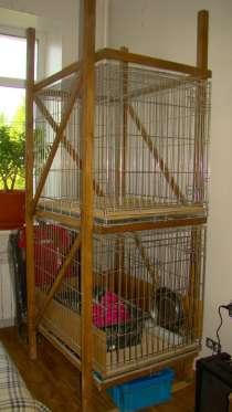 Содержание щенков и кошек в клетке, в Москве