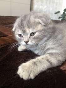 Продаются котята, в Благовещенске