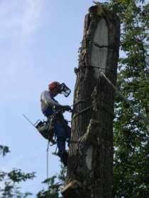 Спилить удалить дерево в Жуковском. Кратово, Быково, Ильинская, в Раменское