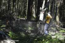 Удаление деревьев в Воронеже и Воронежской области, в Воронеже