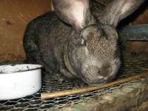 продам кроликов, в Омске