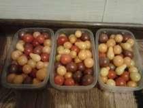 Продам помидоры Черри ассорти, в г.Запорожье