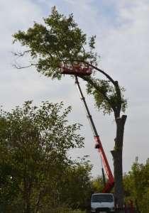 Удаление Опасных Аварийных Проблемных Деревьев, в Балашихе