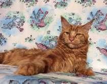 Кошка Мейн Кун даром, в Екатеринбурге