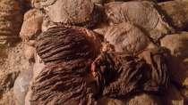 Куплю говяжью кишку, в г.Бишкек