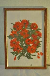 Картины из сухоцвета смешные коты и совы, в г.Днепропетровск